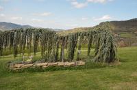 Renommiertes Landhaus zum Verkauf im Piemont Italien. - The gardens are well maintianed