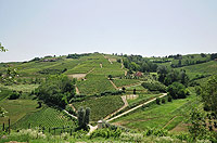 Bella cascina in vendita in Piemonte - Panoramic vineyard views from the property