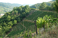 Rustico in vendita in  Piemonte - Vineyard views to the right of the property