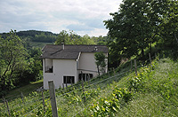 Country property with vineyards for sale in Italy - Back view of the property