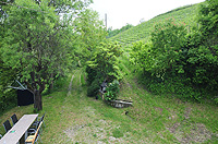 Country property with vineyards for sale in Italy - Garden area to the front of the property