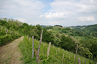 Country property with vineyards for sale in Italy - Vineyards with the property