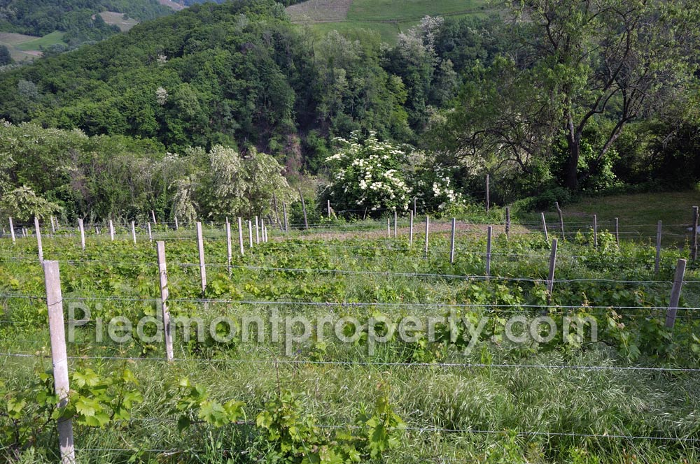 Country property with vineyards for sale in Italy Bubbio (6541