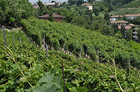 Italian Rustic House for sale in Piemonte - Vineyards in front of the property