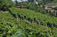 Casa in vendita in Piemonte - Vineyards in front of the property