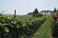 Italian Rustic House for sale in Piemonte - Vineyard views from the property
