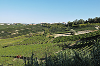 Vacation Rental in Piemonte Italy - Vineyard views from the Cascina