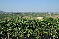 Vacation Rental in Piemonte Italy - Vineyards surrounding the Cascina