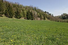 Prestigiosa cascina in vendita in Piemonte - Flat land with the property