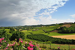 Successful and established business for sale in Piemonte, Italy. - Views from the property