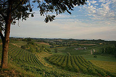 Successful and established business for sale in Piemonte, Italy. - Vineyards with the property