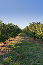 Successful and established business for sale in Piemonte, Italy. - The business has it's own hazelnut groves