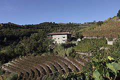 Luxury Country Home & Vineyards for sale in Piemonte - Luxury country home with swimming pool and vineyards with 360 degree commanding views over the Belbo wine valley.
