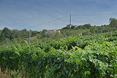 Country House for sale in the Langhe region (Piemonte) - Distant view of the property