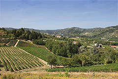 Country House for sale in the Langhe region (Piemonte) - Vineyard views
