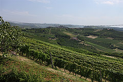 Restored Italian farmhouse - The property enjoys panoramic vineyard views