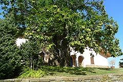 Luxury Home for sale in Piemonte. - Garden area