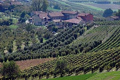 Business For Sale - Vineyards