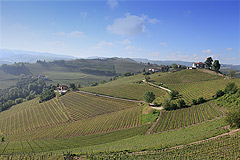 Country House with vineyard views for sale in Piemonte. - Vineyard views from the property