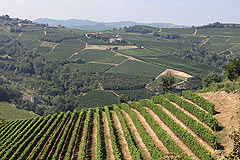 Appartamento in vendita in Piemonte - Panoramic vineyard views from the property