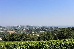 Bella cascina con piscina, vista panoramica in Piemonte. - Vineyard views