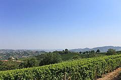 Sehr schönes Landhaus & Schwimmbad mit Blick auf die Weinberge im Piemont. - Panoramic views