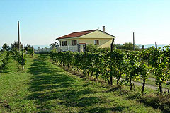 Landhaus Nähe Acqui Terme Piemont - Vineyards surround the property