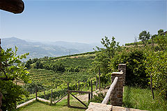Country Stone House for sale in Piemonte - Vineyard views