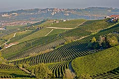 Wine Business for sale in Piemonte - 29 Hectare Winery equipped for production of 500,000 bottles,including Barbera, Moscato, Nebbiolo, Chardonnay and Pinot