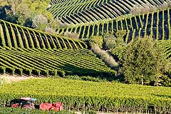 Wine Business for sale in Piemonte - Vineyards for sale in Piemonte