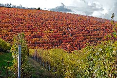 Wine Business for sale in Piemonte - Vineyards for sale in Piedmont Italy
