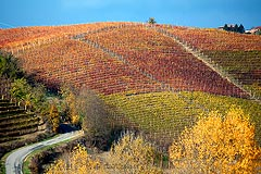 Wine Business for sale in Piemonte - Wine business for sale in Piemonte Piedmont