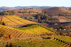 Wine Business for sale in Piemonte - Winery for sale in Piemonte Piedmont