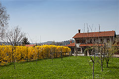 Country Home for sale in the Langhe region of Piemonte - Charming Country Home close to Alba and located in a panoramic position with wonderful views