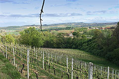 Country Wine Estate for sale in Piemonte - Views