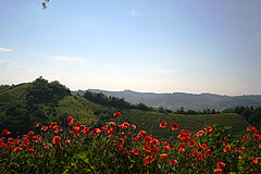 Beautiful Country Home for sale in Piemonte - Panoramic views