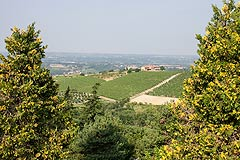 Italian Villa for sale in Piemonte - Vineyard views from the property