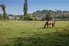 Luxury Equestrian Property for sale in Piemonte Italy - Area for horses