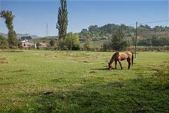 Bellissima proprietà equestre in vendita in Piemonte - Area for horses