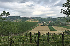 Italian Farmhouse with vineyards for sale in Piemonte - Vineyards with the property