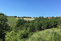 Italian farmhouse with barn for sale in Piemonte - Views