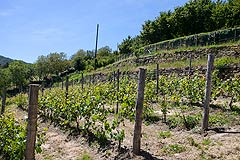 Luxury Country Home  for sale in Piemonte - Vineyards with the property