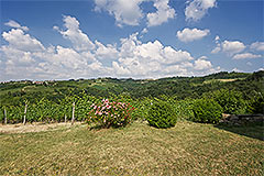 Country Estate with Vineyard for sale in Piemonte - Views