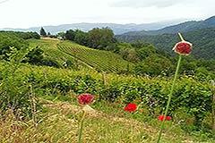 Italian Villa for sale in Piemonte - Views