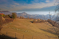 Country Estate for sale in Piemonte - Land and views