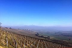 Italian farmhouse for sale in Piemonte - Vineyard views