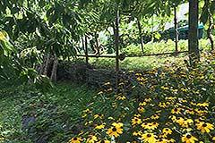 Immobilie zum Verkauf in der Region Langhe im Piemont - Gardens