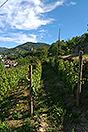 Lussuosa casa in vendita in Piemonte - Vines