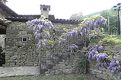 Country Estate for sale in Piemonte Italy - Outside area