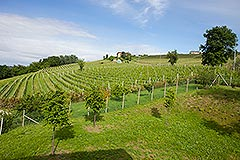 Country House for sale in the Langhe region of Piemonte - Vineyard views